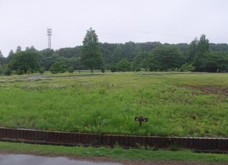 20110605_sibazakura