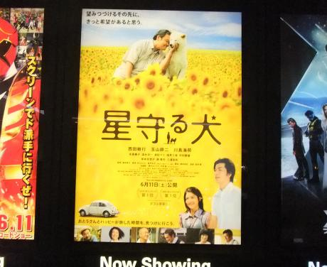 20110613_hoshimamoruinu