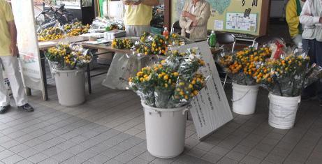 20110704_benibana_hanbai