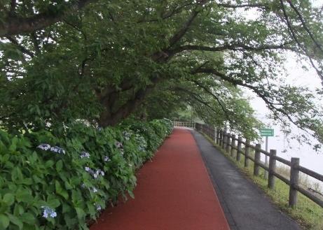 20110715_yuuhodou3