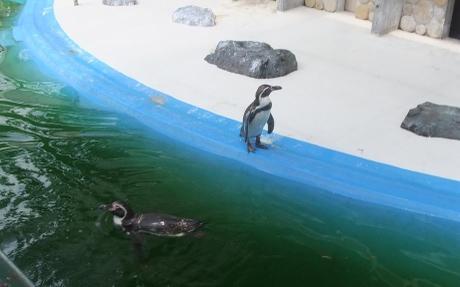 20110720_penguin