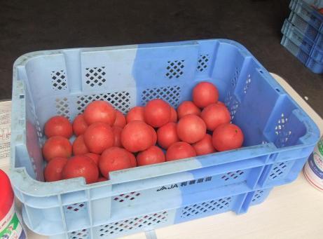 20110818_tomato1