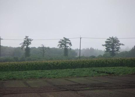 20110827_sanbonmatsu