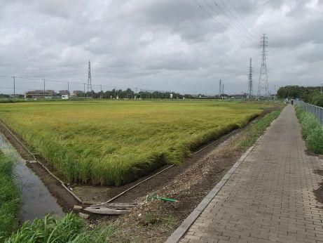 20110921_fureai_road1