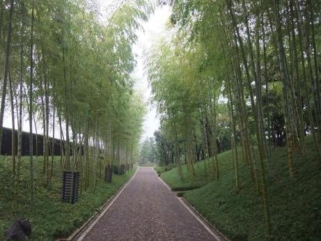20111105_chikurin