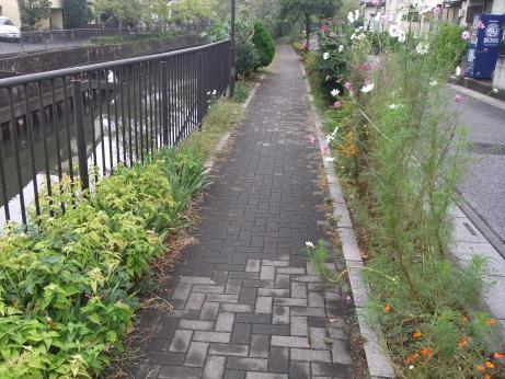 20111106_sakariver_midorinomichi3