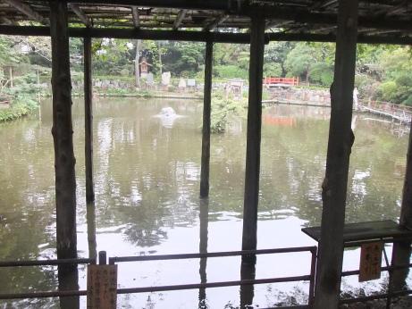 20111107_kamiike
