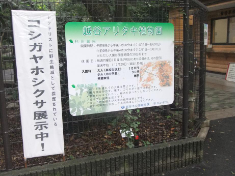 20111108_aritaki_syokubutsuen