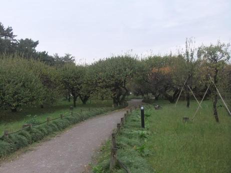 20111108_bairin_park