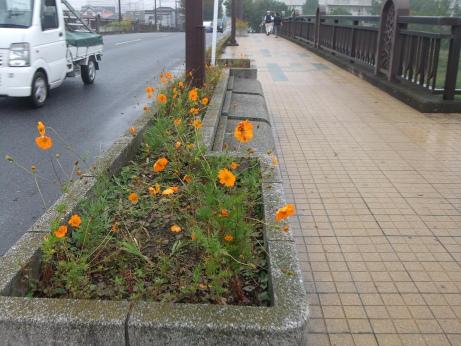 20111108_fudou_bashi2