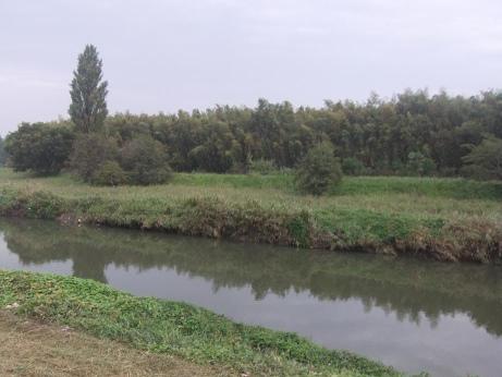 20111108_kamoba2