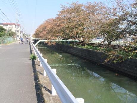 20111119_sakura_dori