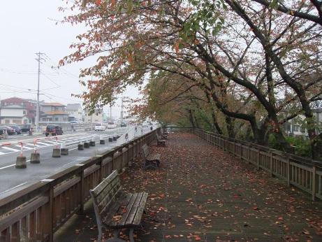 20111119_sakura_dori2
