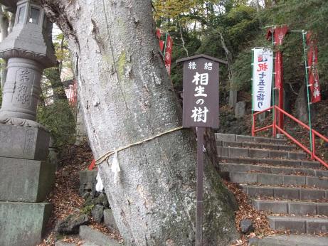20111122_aioinoki