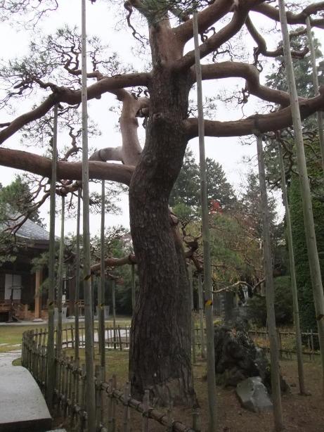 20111126_akamatsu