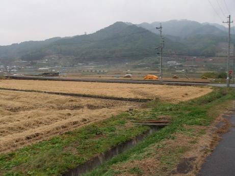 20111202_tanbo1