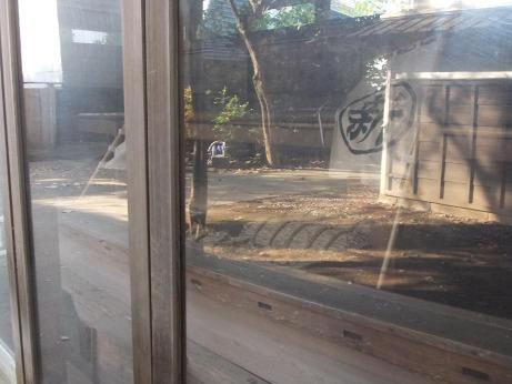 20111213_hirata_bune