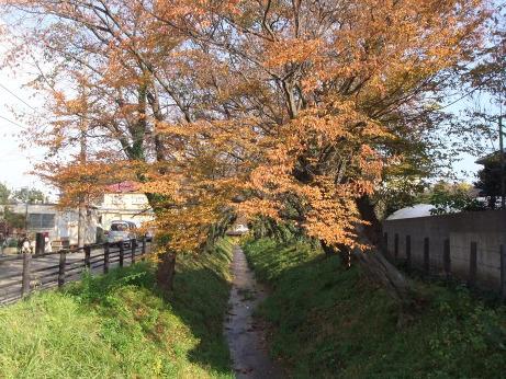 20111213_minuma_tsusenbori2