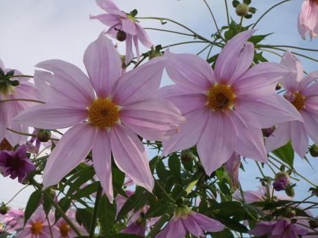20111214_flower2