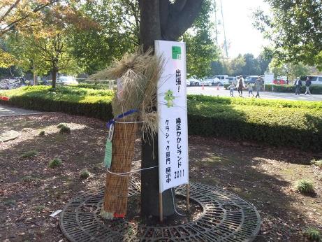 20111215_kakashi_land