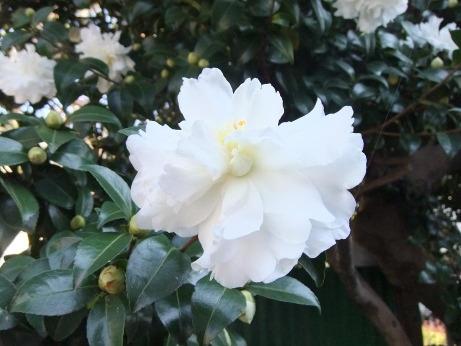20111217_white_flower
