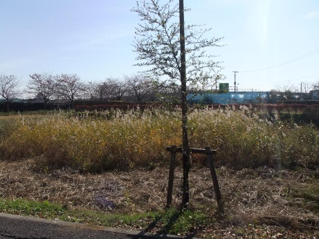 20111219_susuki