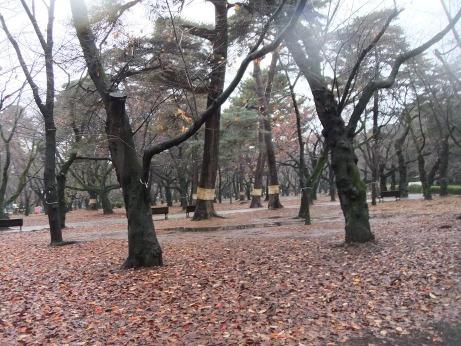20111226_park1