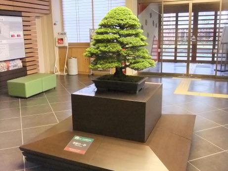 20111227_kisetsuno1hachi
