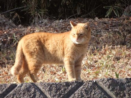 20120108_cat1