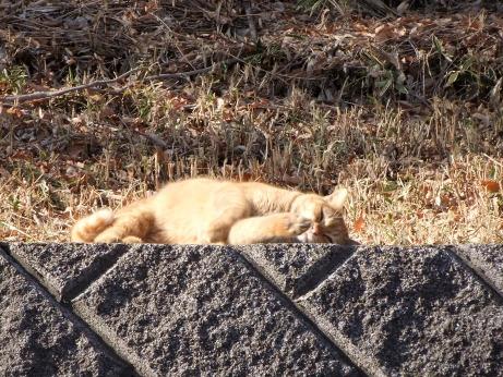 20120108_cat2