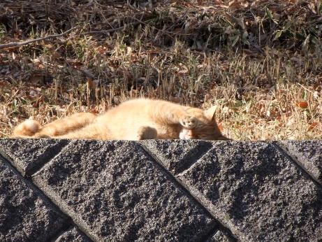 20120108_cat3