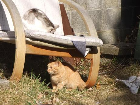 20120404_cat