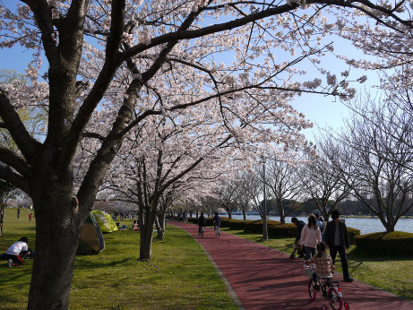 20120410_misato_park06