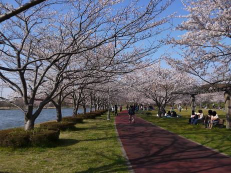 20120410_misato_park07