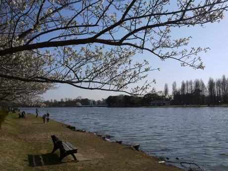 20120410_misato_park11