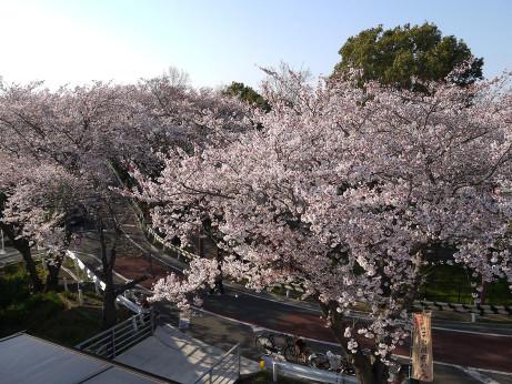 20120411_mizumoto_park01