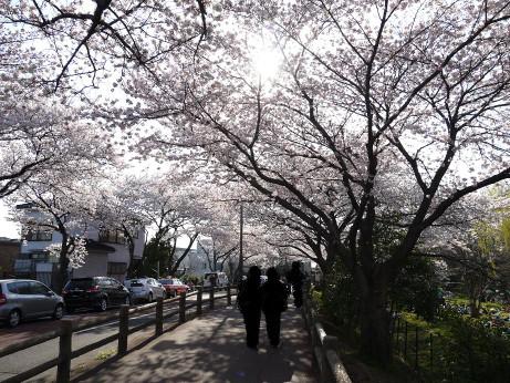 20120411_mizumoto_park08