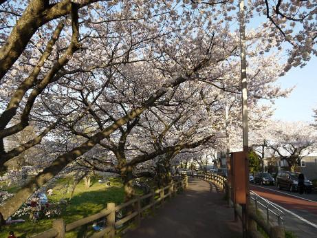 20120411_mizumoto_park09