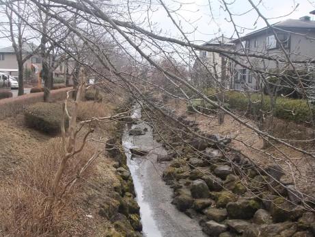 20120412_yakushi_river1