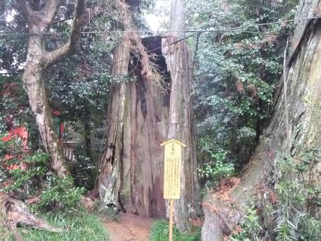 20120414_sanbonsugi