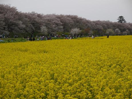 20120417_gongendou01