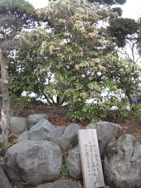 20120512_kannonji_shinkokyu