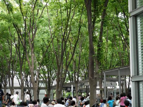 20120521_keyaki_hiroba