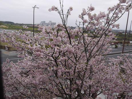 20120524_shiroyama_park05
