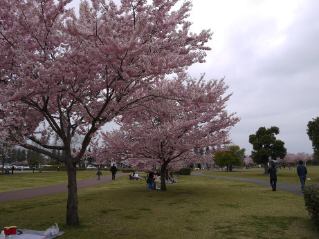 20120530_oyama_park5