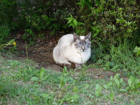 20120602_cat