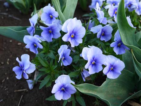20120602_flower2