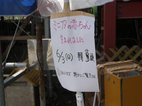 20120607_enomoto_farm7