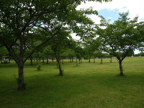 20120618_misato_park1