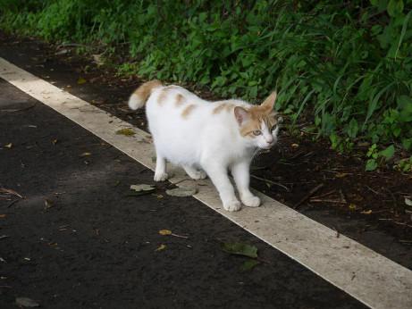 20120623_cat